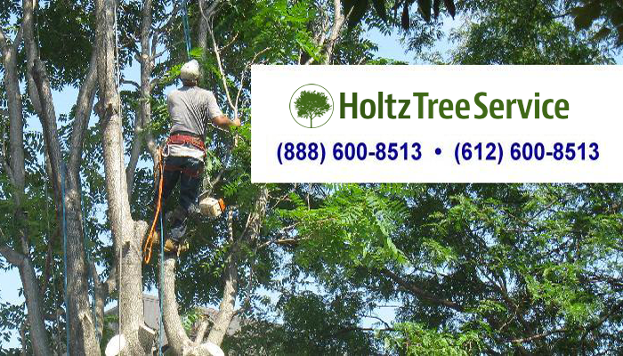 Holtz Tree Service of Minnesota