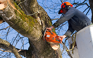 Complete tree service serving Minnesota