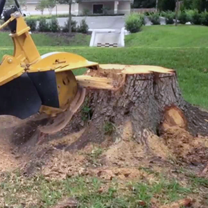 stump grinding, brush and Buckthorn removal service - MN