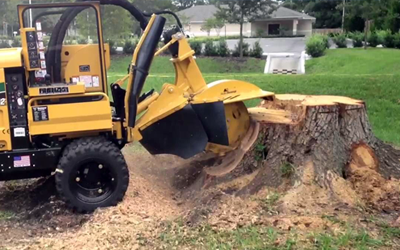 stump grinding service - Saint Cloud, Minnesota