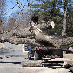 Tree removal and tree trimming services - MN