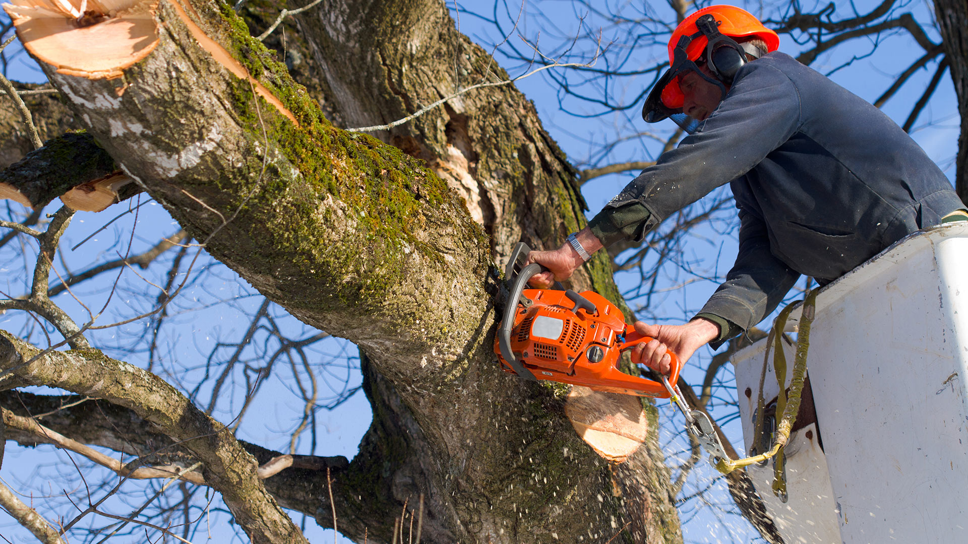 your local tree service pros tree removal trimming holtz tree service. Black Bedroom Furniture Sets. Home Design Ideas