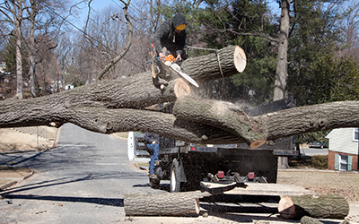 Tree Service and Storm Damage Cleanup - Brainerd, Minnesota